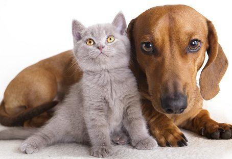 Prevenzione al tempo del Covid-cane e gatto