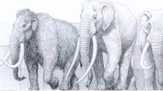 scoperta-eclatante-esemplare-Elephas-Antiquus