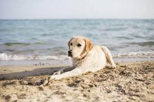 Spiaggia per animali? Riapre Baubeach. Cani liberi e felici