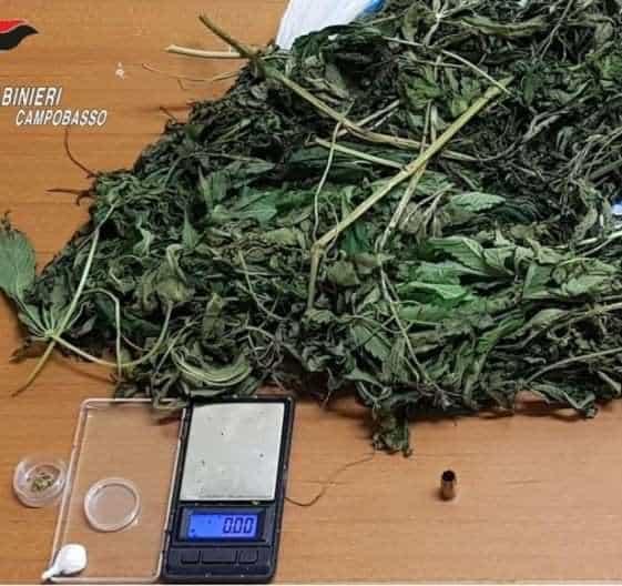 Bojano cocaina e marijuana. Perquisizione personale e domiciliare per un 40enne