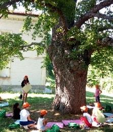 Scuola estiva nel bosco