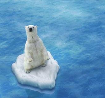 orso polare estinzione riscaldamento globale