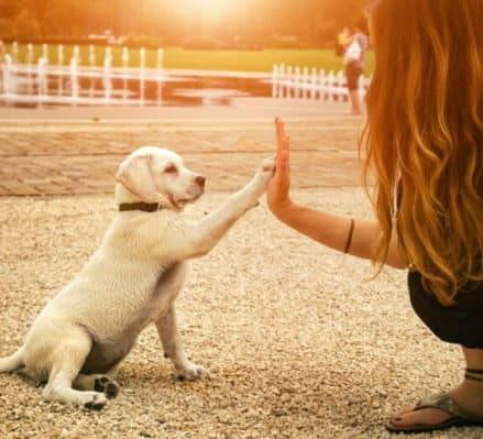 500 euro a chi adotta un cane randagio