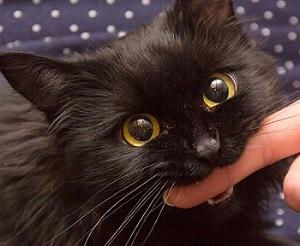 4-zampe-al-Comune-gatti