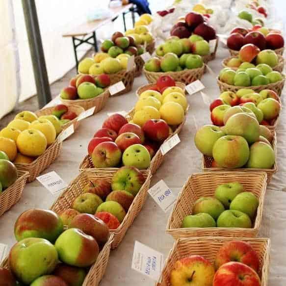 Festa della Mela: mele, miele e birra a Castel del Giudice per la 3 edizione