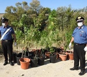 Marijuana-lungo-il-torrente