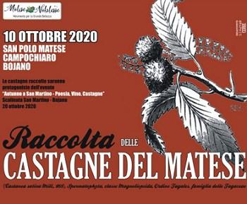 Raccolta-castagne-del-Matese