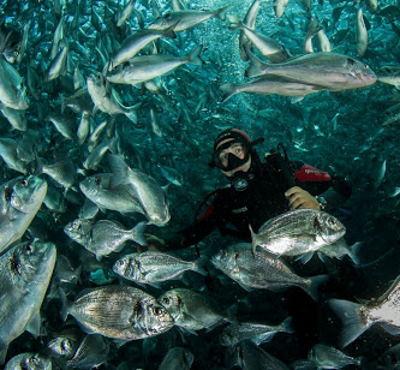 Storia di una sofferenza silenziosa. Cosa accade negli allevamenti ittici intensivi