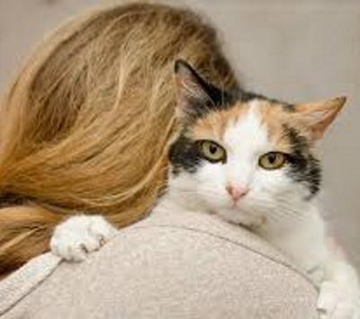 Vivere col gatto fa bene alla salute. Una ricerca dell' Università di Minneapolis