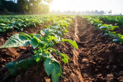 agricoltura-contributi-a-rischio