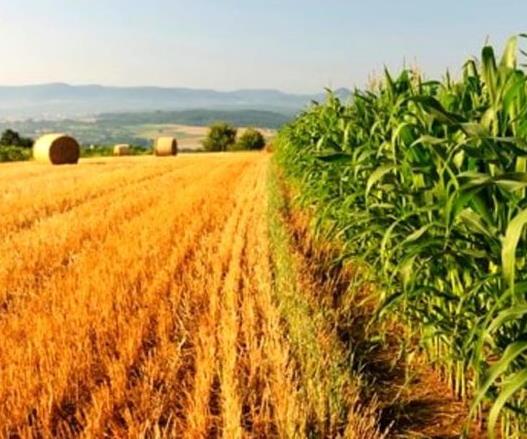 agricoltura-la-regione-molise