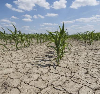 Allarme siccità in Italia. Governo stanzia 8 milioni