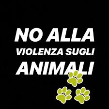 Animal Equality: 10 contro la violenza sugli animali