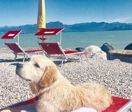 Baubeach. La prima spiaggia per cani liberi e felici