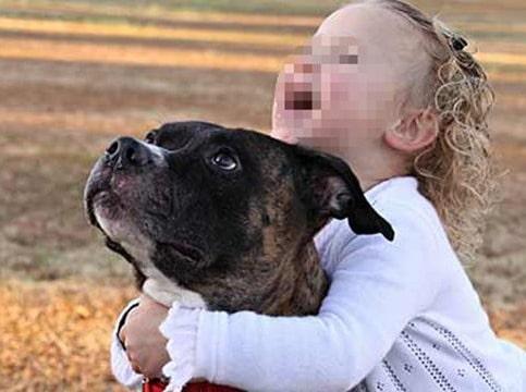 Brescia, bimba di un anno azzannata da due cani. In ospedale il nonno e la madre