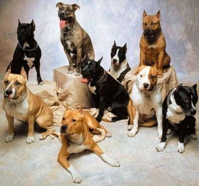 Cani e razze diverse non solo per corporatura. Lo dice ricerca dell'Università di Harvard