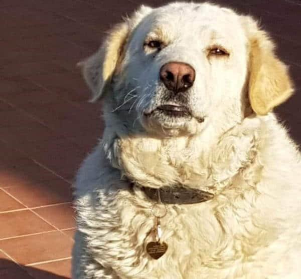 Lieto fine per Carmelina il cane impaurito, magro ed affamato che ha conquistato presto l'amore dei residenti del condominio che hanno presto avviatola procedura per conferirle lo status di cane di quartiere