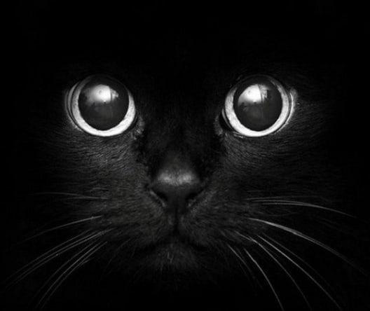 Malocchio, gatto nero, specchio rotto, n.13. Da dove vengono le superstizioni?