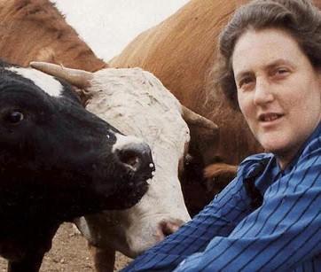 Siate gentili con le mucche. Temple Grandin, diversa ma non inferiore