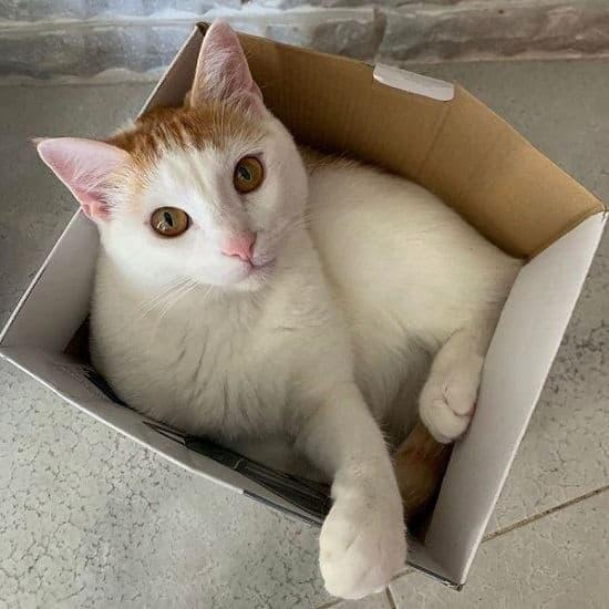 Gatto in scatola e follie dei nostri amici quattrozampe. Ecco perché i gatti amano nascondersi