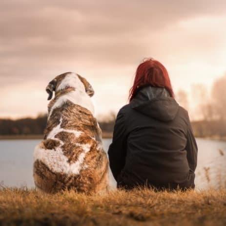 Padroni e animali riposano