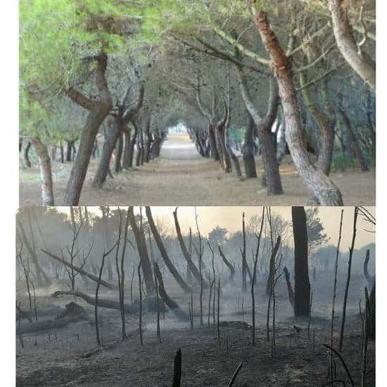 Incendi costa molisana cancellata pineta, simbolo di Campomarino