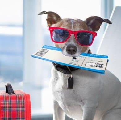 Virgin Australia Airlines ti fa volare con il cane. La compagnia ammette gli animali a bordo