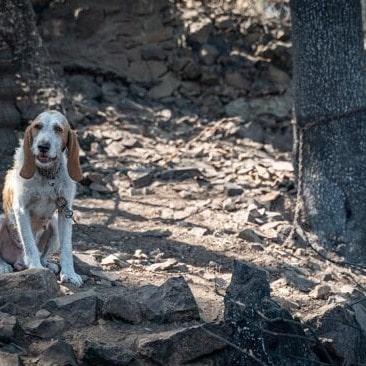 Cani legati bruciati vivi durante i roghi in Sardegna. Serve una legge per eliminare le catene!