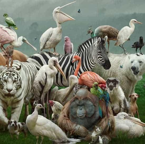 Animali si adattano al cambiamento climatico. Alcune specie mutano per disperdere il calore