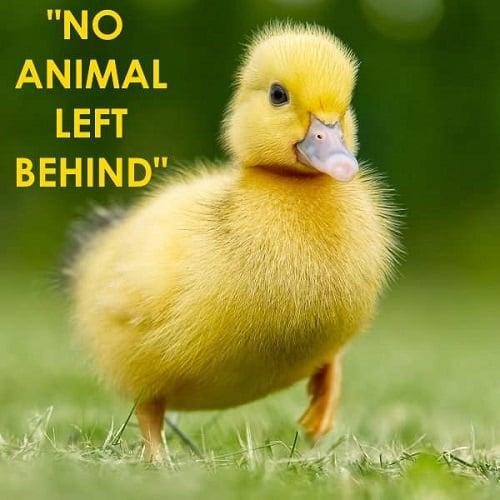 No Animal Left Behind la campagna di Animal Equality per tutelare gli animali in Europa
