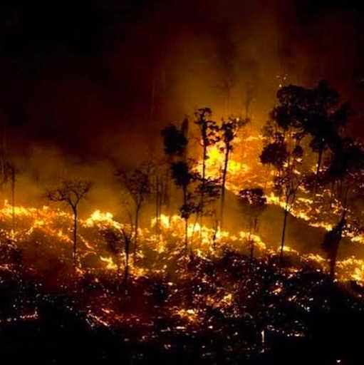 Perché il Brasile brucia? Francesco De Augustinis a Animal Equality