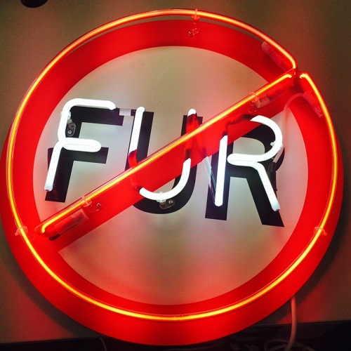 Stop uso pellicce animali. Aderiscono brand famosi: da Giorgio Armani a Yves Saint-Laurent