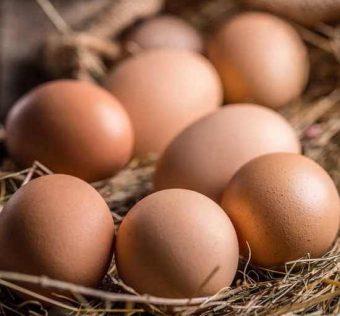 Uova cage-free. Gli animali sono fuori dalle gabbie
